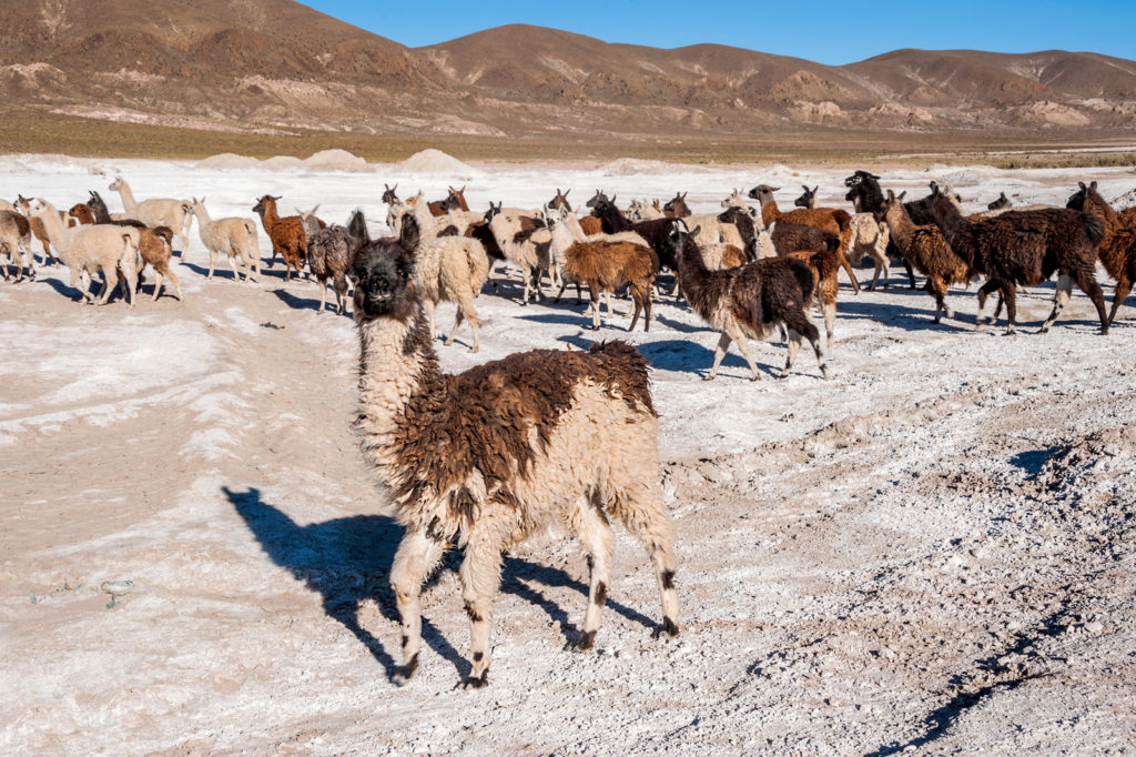12 Interesting Facts About Bolivia You Did Not Know 3